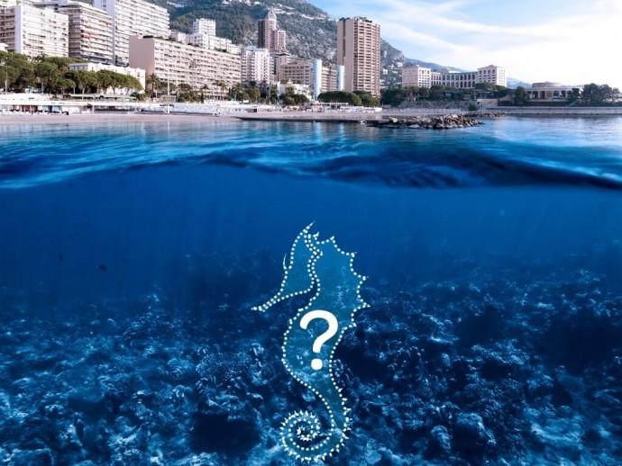 Campagne Sauvez les Hippocampes 2016 à Monaco